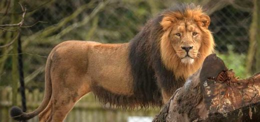 Chester Zoo Tickets & Hotel Packages