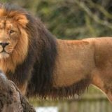 Chester Zoo Tickets & Hotel Package Deals